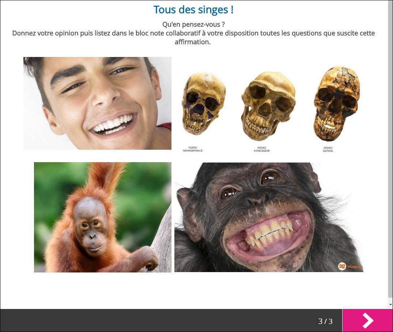 tous_des_singes_brne